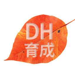 DH育成
